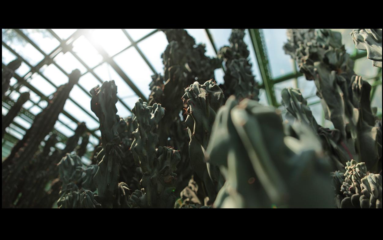 cactusi 4 de sus in jos mic