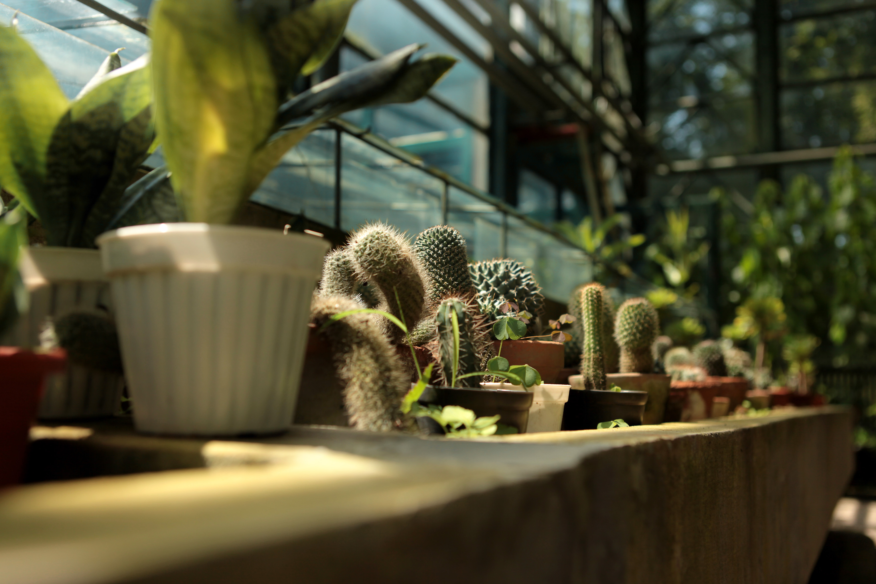 cactusi in sera 2